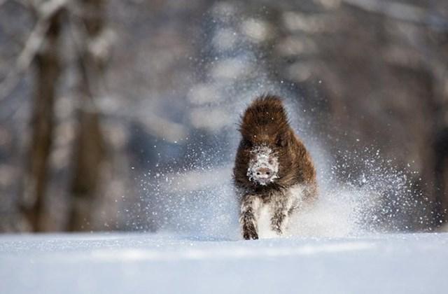 100 самых красивых зимних фотографии: пейзажи, звери и вообще 0 10f5c8 f5592482 orig