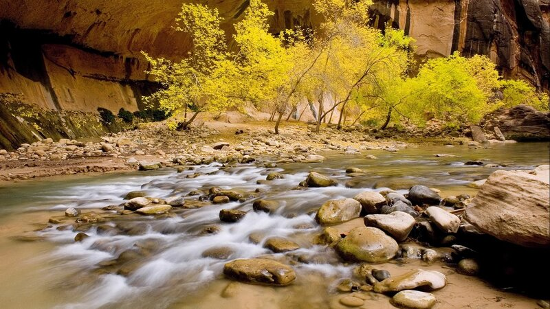 Trees displaying fall foliage in the Zion canyon narrows, Zion National Park. Utah, USA