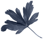 leaves4-(lthdsgn).png