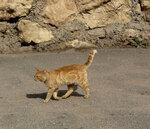 999_2086 кот.jpg