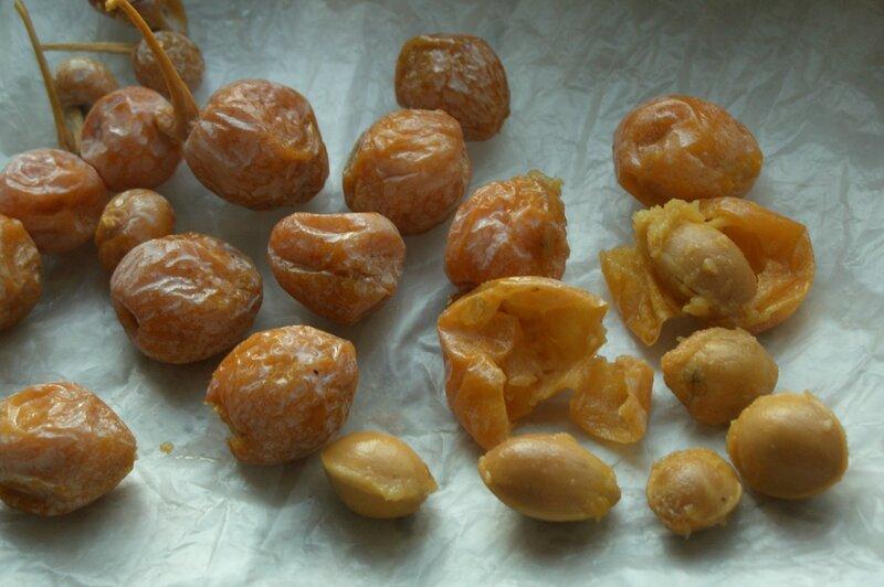 Плоды гинкго напоминают абрикосы