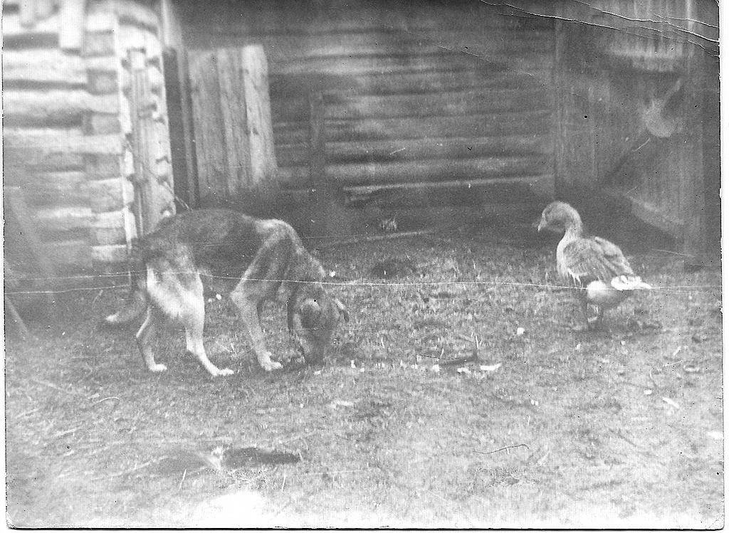7. Все фотолюбители начинают карьеру со съемки собачек и птичек. Я - не исключение!