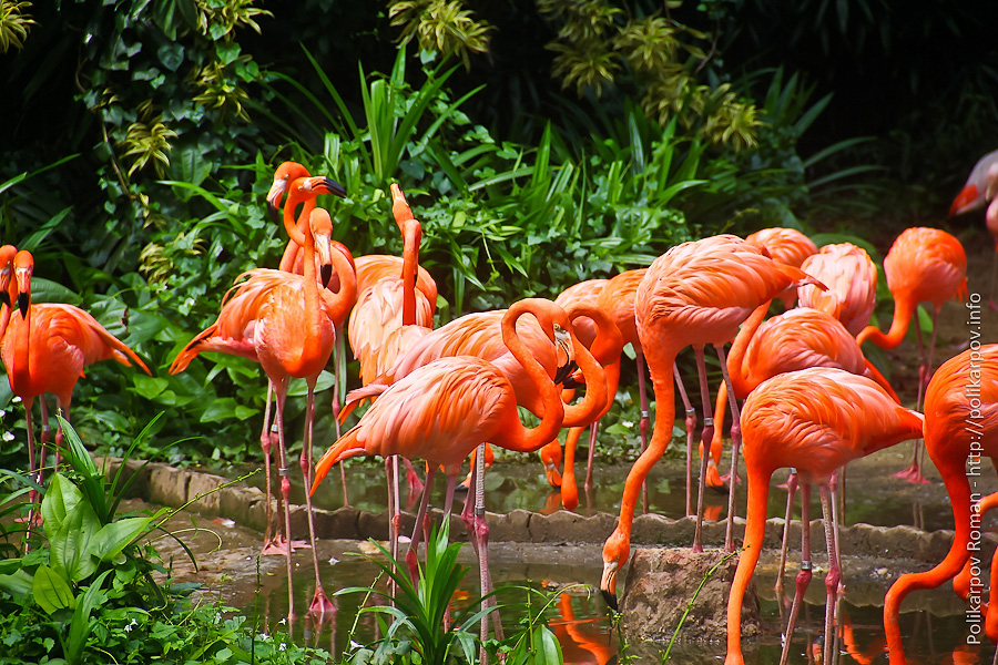 0 c4fa0 531a44af orig Парк птиц Jurong в Сингапуре
