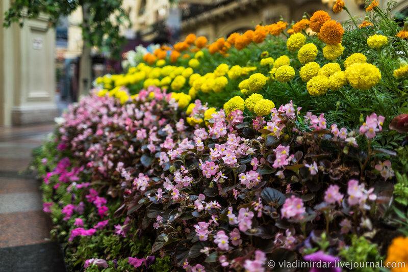 Цветы из ГУМа