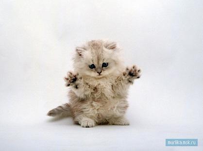 Кошачья агрессия