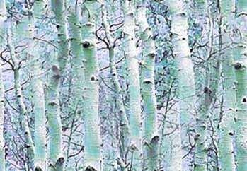 бесшовные фоны, деревья и листья