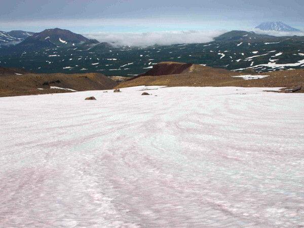 Красный снег, Камчатка