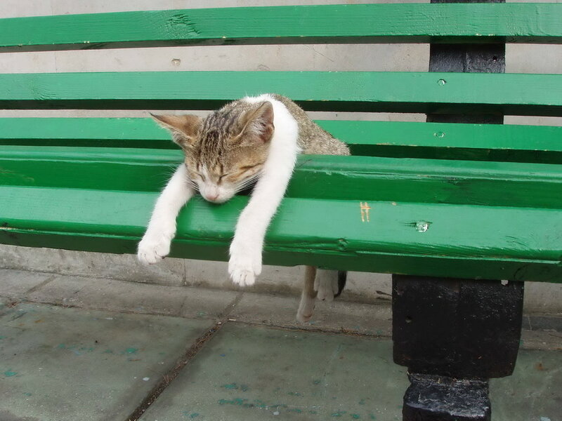 Спят усталые зверушки...