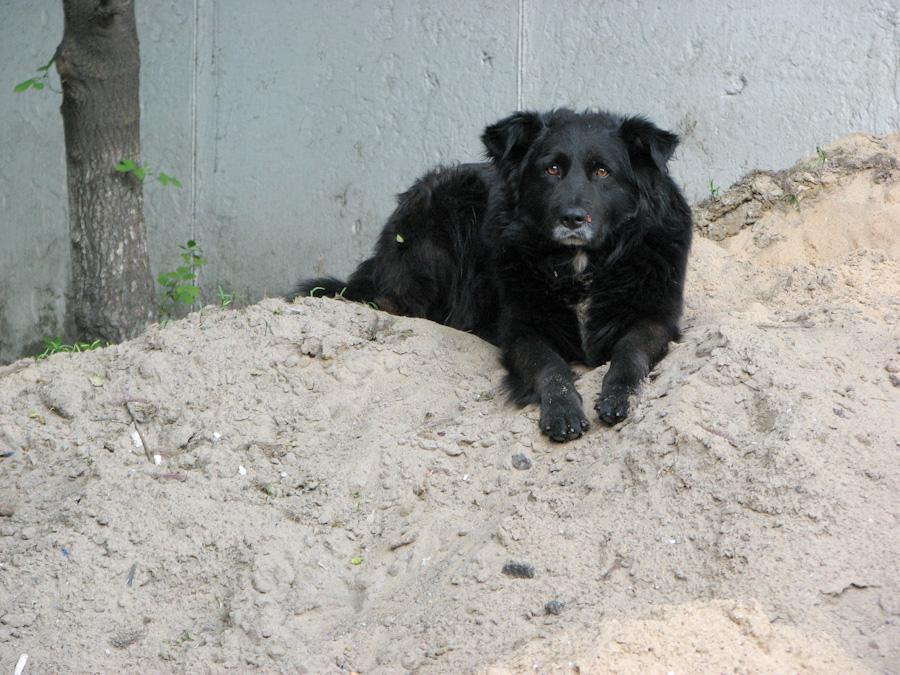 2010, животные, собака