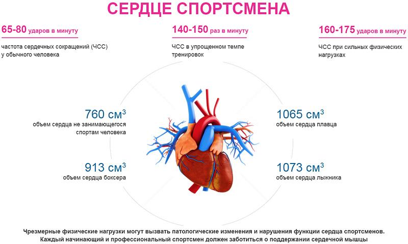 Сердце спортсмена