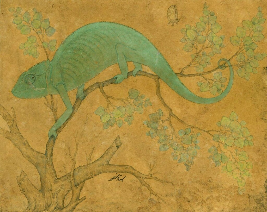 1280px-Mansur__A_Chameleon__1612,_Royal_Collection,_Windsor_Castle.jpg