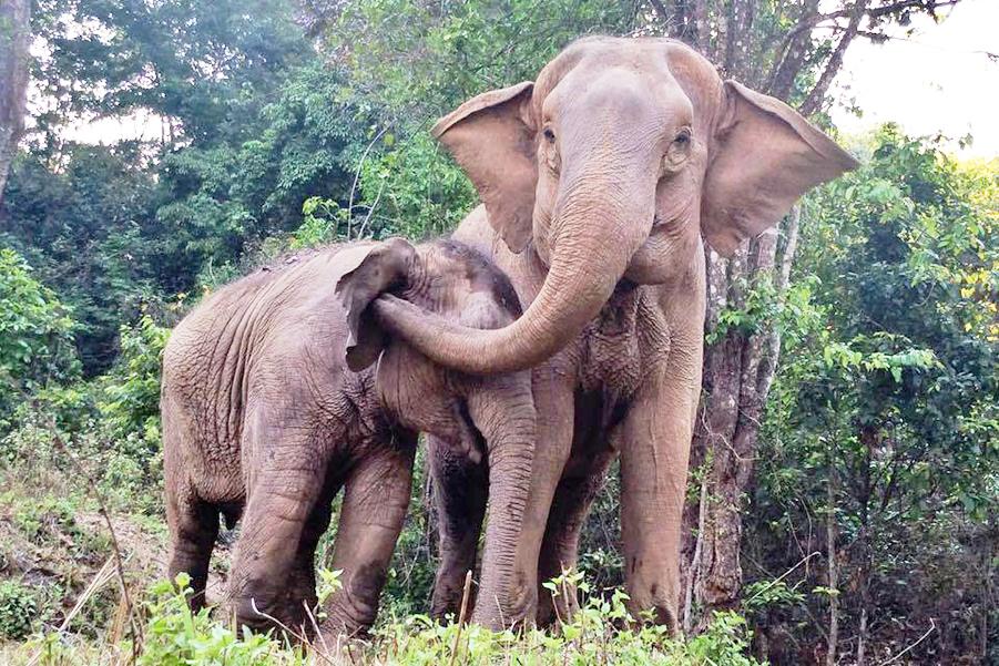 Слоновьи яйца
