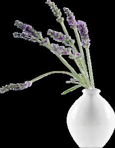 вазы с лавандой