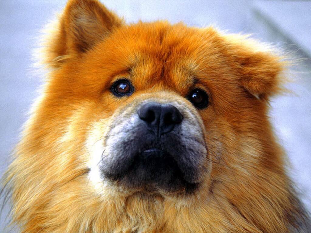 Здивований пес