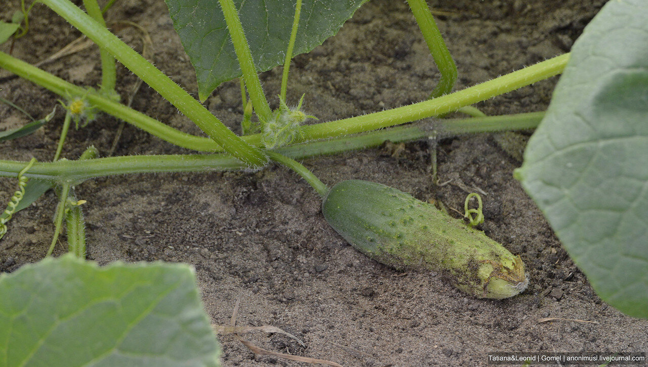 Урожай