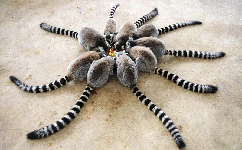 Эта ящерица определенно чувствует себя царем Индонезии