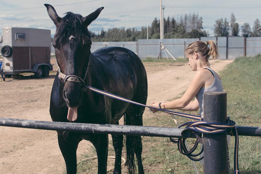 фото, лошади, конюшня, портрет