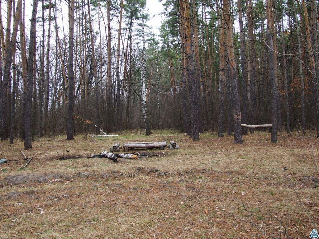 Место отдыха в лесу