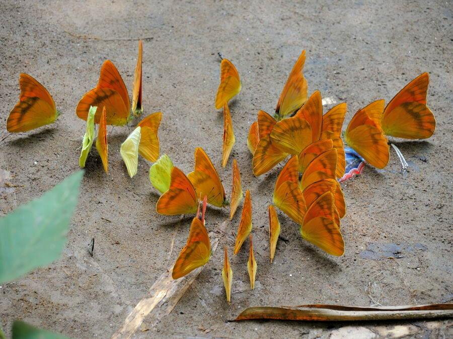 Куча бабочек