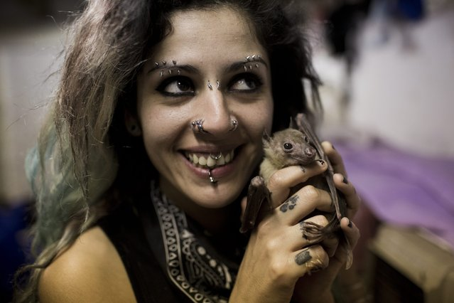 Nora Lifschitz treats a wounded Egyptian fruit bat in her apartment in Tel Aviv, Israel, 29 February