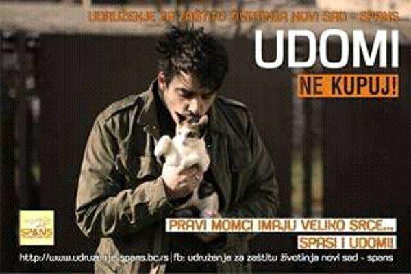 Сербия, защита животных, Нови-Сад