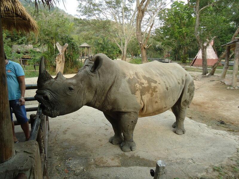 Зоопарк Кхао Кхео - Носорог