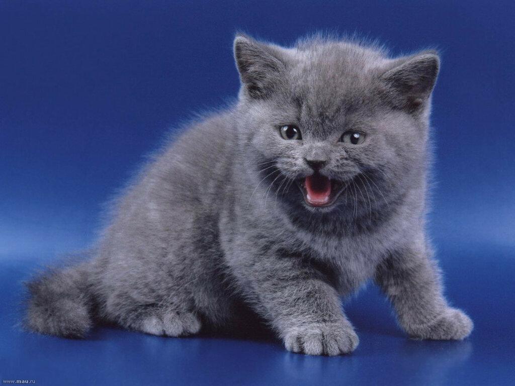 kitty060.jpg