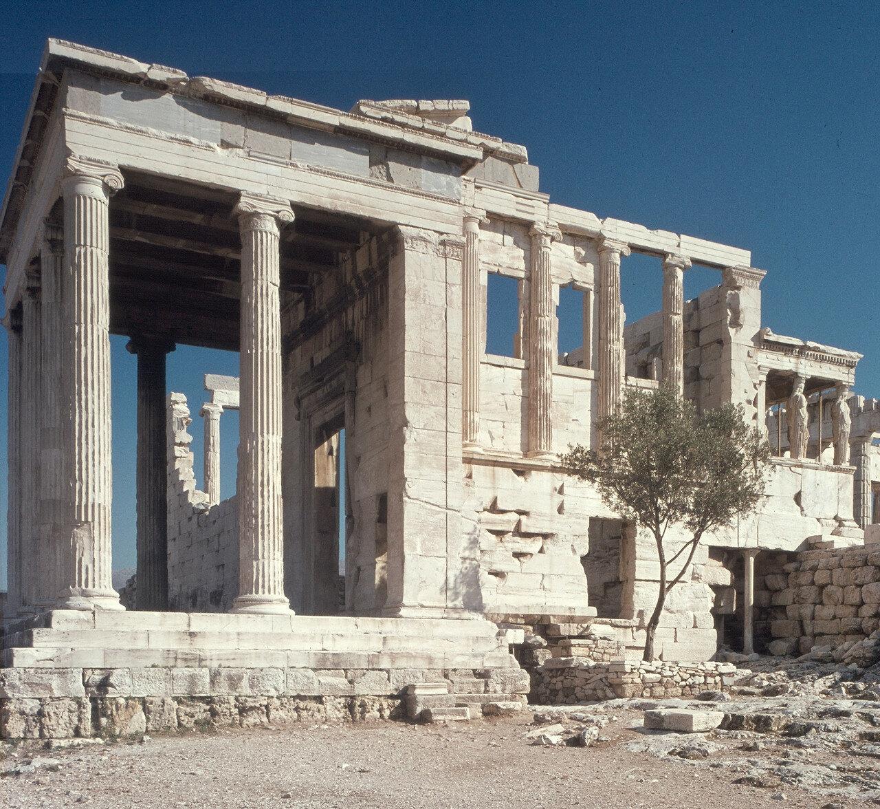 Афины, Акрополь. Эрехтейон с запада и священное оливковое дерево