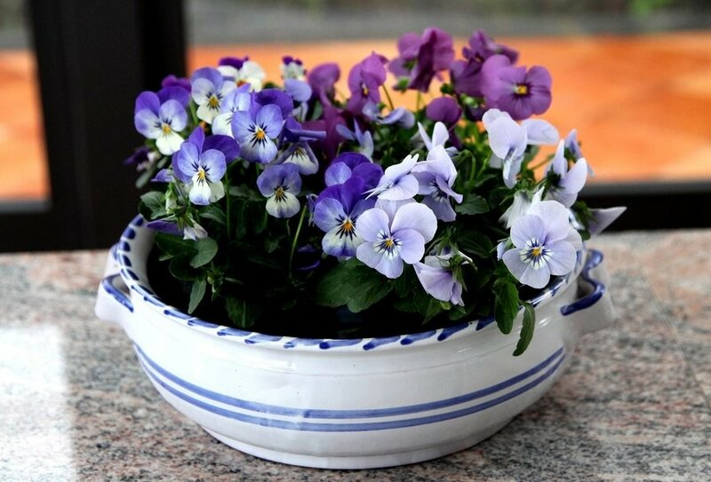 72667__teacup-of-pansies_p.jpg