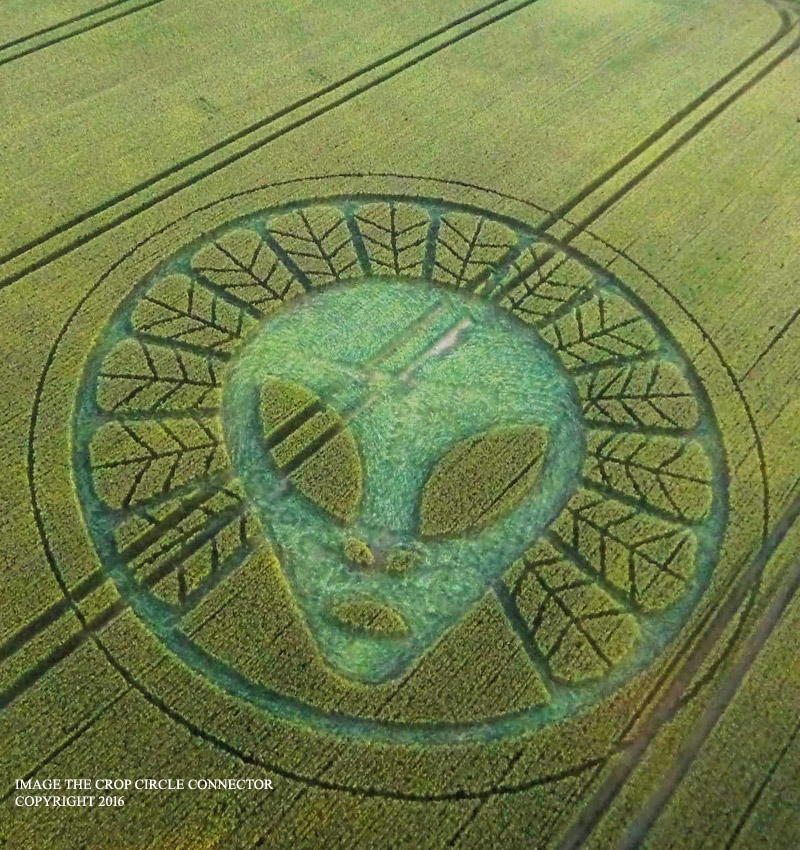Crop circle at reigate hill reigate surrey uk 19 july 2016 first circle this year with the image of gray alien humanoid publicscrutiny Choice Image