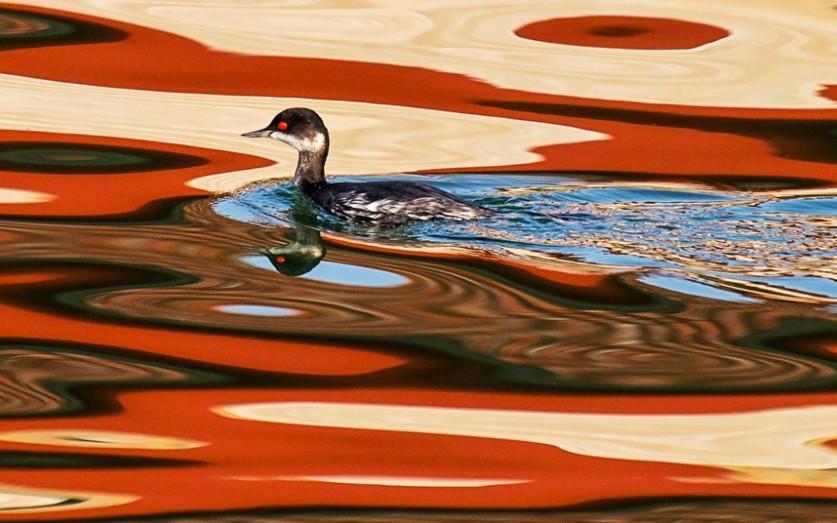 Кажется, будто эта поганка плывёт по картине акварелью, хотя на самом деле в воде отражаются разноцв