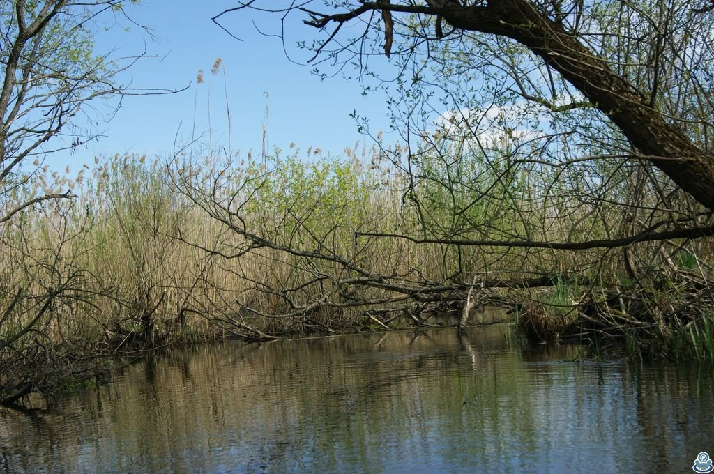 Сухое дерево над рекой