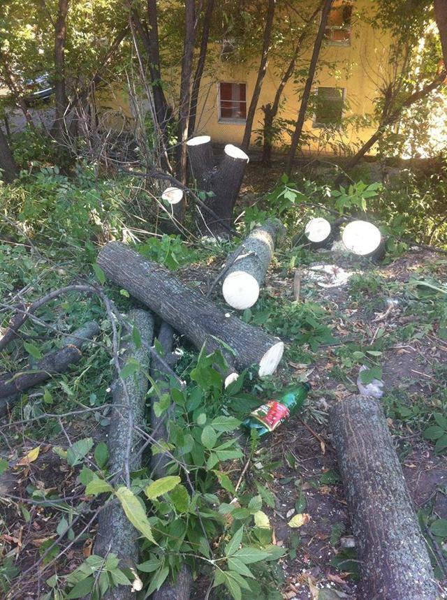 Киеву нанесен ущерб в 500 тыс. грн из-за массовой вырубки деревьев на Пейзажке, – КГГА
