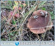 http://img-fotki.yandex.ru/get/29473/161956531.11/0_173cd7_defe0fce_orig.png