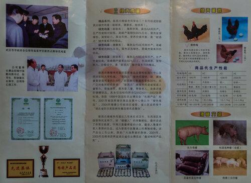 Китайские куры Син-син-дянь - Страница 10 0_18fd7e_d114deec_L