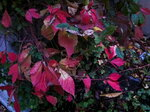 Осенняя тайна