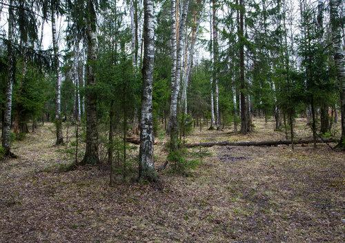 В лесу Подмосковья