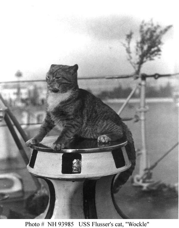 USS Flusser (DD-289) Wockle, the ship's cat, poses on the capstan, at Venice, Italy, in 1924-25