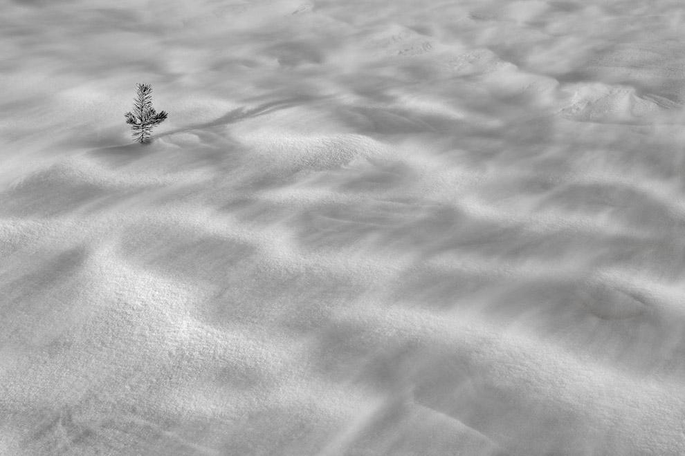 Снежная буря в заповеднике Ансель Адамс. (Фото Peter Essick):