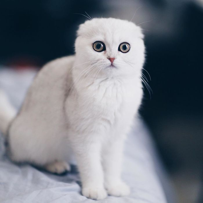 Этот котик всегда очень сильно смущен, и никто не знает