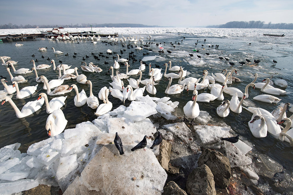 7. Фотографы снимают Дунай со льдинами в Будапеште. (Фото Attila Kisbenedek):