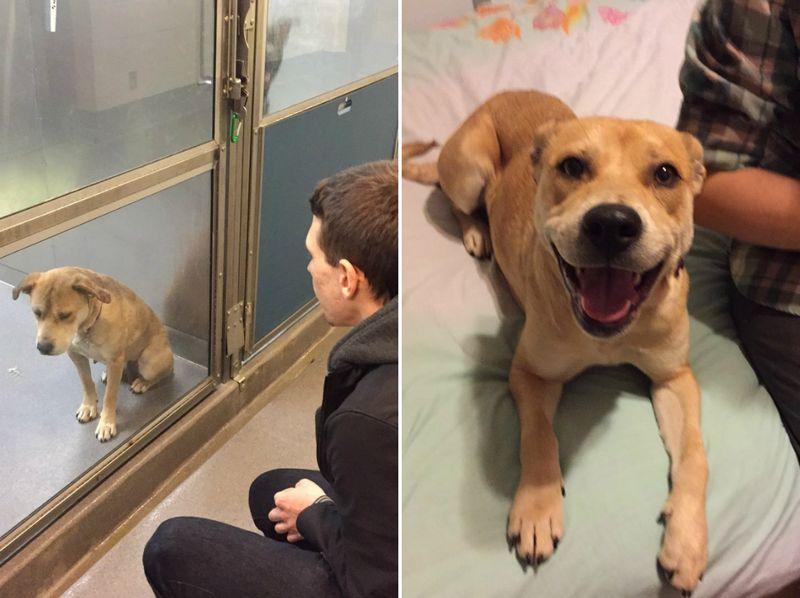 2. Взяли пса из приюта. Разница в один день.