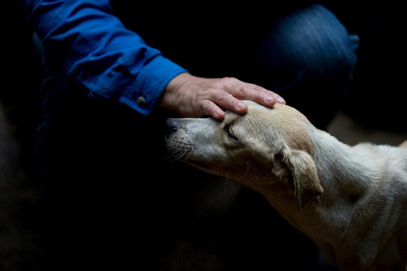 Дексис Касадиего — ветеринар и совладелец частного приюта для животных в одном из рабочих кварталов Каракаса, Венесуэла, гладит брошенную собаку, 23 июля 2016 года. Во время экономического кризиса в Венесуэле на улицах оказалось очень много брошенных кошек и собак. (Fernando Llano / AP)
