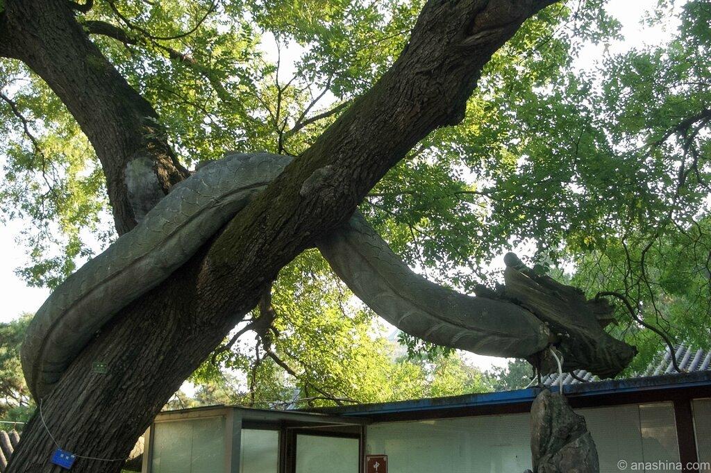 Дракон на дереве, Бадачу