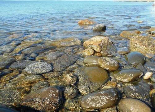 Прозрачность мартовской спокойной воды Азовского моря ... DSCN1301.JPG