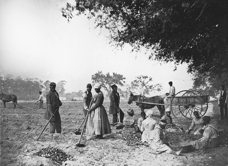 James_Hopkinsons_Plantation_Slaves_Planting_Sweet_Potatoes.jpg