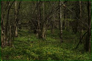http://img-fotki.yandex.ru/get/29815/15842935.2e7/0_e388a_1327cf7d_orig.png