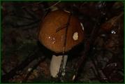 http://img-fotki.yandex.ru/get/29815/15842935.37e/0_eab82_91119f49_orig.jpg