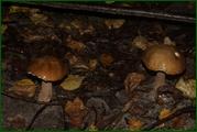 http://img-fotki.yandex.ru/get/29815/15842935.37e/0_eab86_78ef57b5_orig.jpg