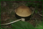 http://img-fotki.yandex.ru/get/29815/15842935.37f/0_eabc6_36e98f73_orig.jpg